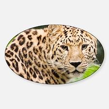 Amur leopard - Decal