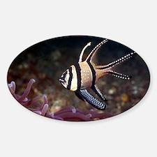Banggai cardinalfish - Sticker (Oval)