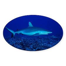 Bull shark - Decal