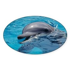 Bottlenose dolphin - Decal