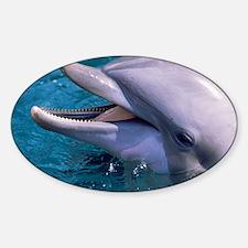 Bottlenose dolphin - Decal