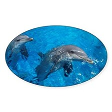 Bottlenose dolphins - Decal