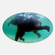 Asian elephant (Elephas maximus) - Decal