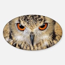 Bengalese eagle owl - Decal