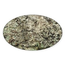 Camouflaged peppered moth - Decal
