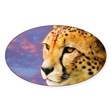 Cheetah - Decal