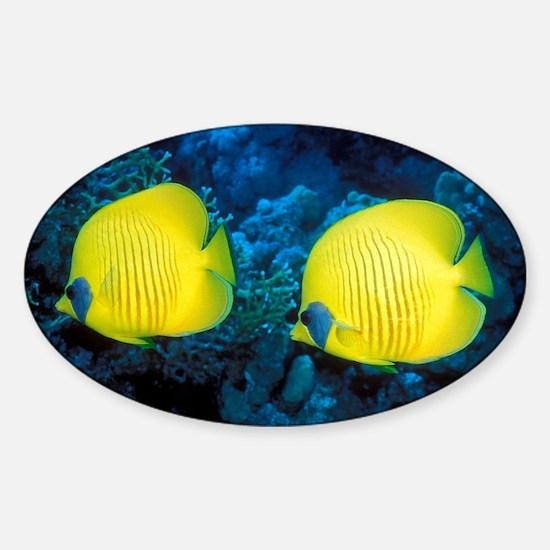 Bluecheek butterflyfish - Sticker (Oval)