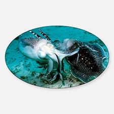 Broadclub cuttlefish - Sticker (Oval)