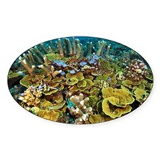 Coral reef community - Decal