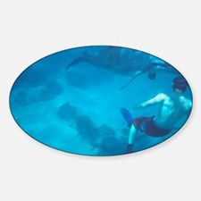Dolphin and swimmer - Decal