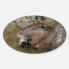 Coypu feeding - Decal