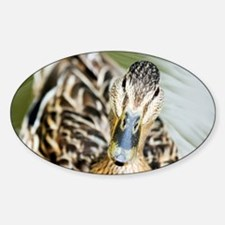 Female mallard duck - Decal