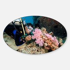 Diver exploring a wreck - Decal