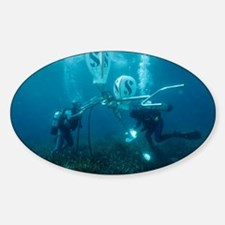 Divers fixing a buoy - Decal