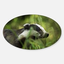 European badger - Decal