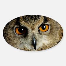 European eagle owl - Sticker (Oval)