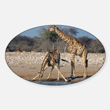 Giraffes - Sticker (Oval)