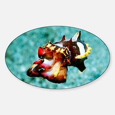 Flamboyant cuttlefish - Decal