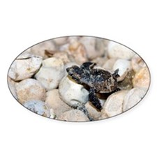 Hatching hawksbill turtle - Decal