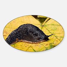 Great black slug - Decal
