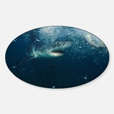 Great white shark - Decal