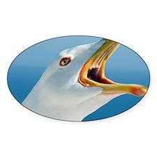 Herring gull - Decal