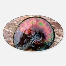 Iridescent ammonite fossil - Sticker (Oval)