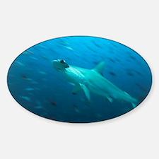 Hammerhead shark - Decal