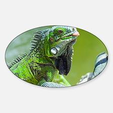 Green iguana - Decal