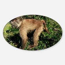 Juvenile chacma baboon - Decal