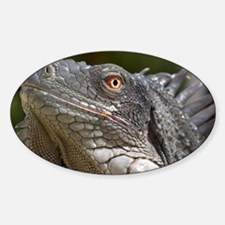 Iguana - Decal