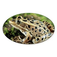 Leopard frog - Decal