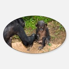 Infant bonobo ape and mother - Decal