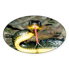Machete savane snake - Decal