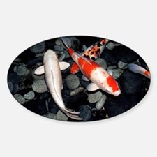 Koi carp in a pond - Decal