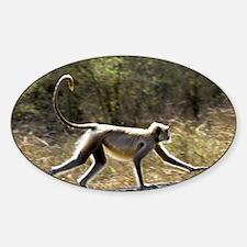 Langur monkey - Sticker (Oval)