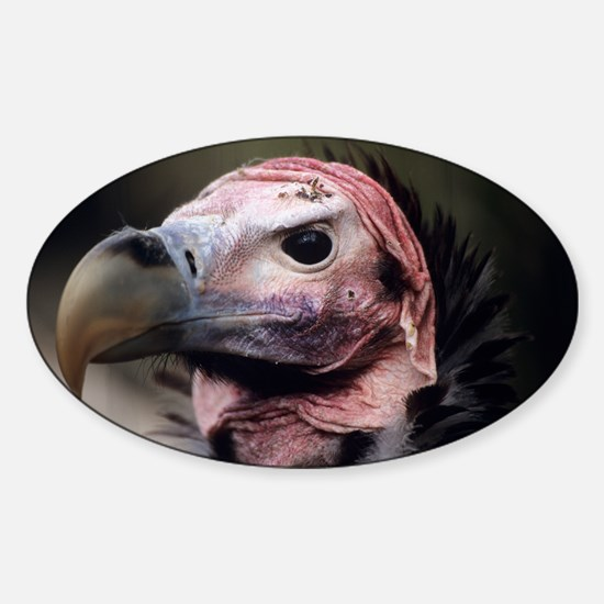Lappet-faced vulture - Sticker (Oval)