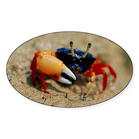 Male fiddler crab - Sticker (Oval)