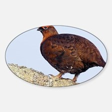 Male red grouse - Sticker (Oval)