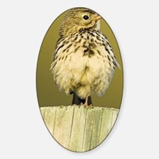 Meadow pipit - Decal