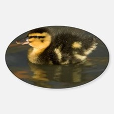 Mallard duckling - Decal