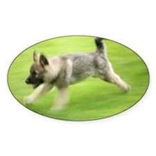 Norwegian elkhound puppy - Decal
