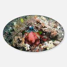 Mantis shrimp with eggs - Sticker (Oval)