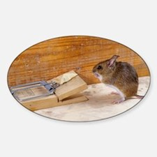 Mouse by a mousetrap - Decal