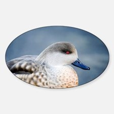 Patagonian crested duck drake - Decal