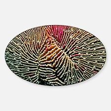 Mushroom coral - Decal