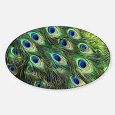 Peacock feathers - Sticker (Oval)