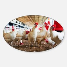 Organic chicken farming - Sticker (Oval)