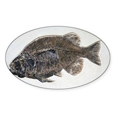 Phareodus fish fossil - Decal