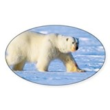 Polar bear Single
